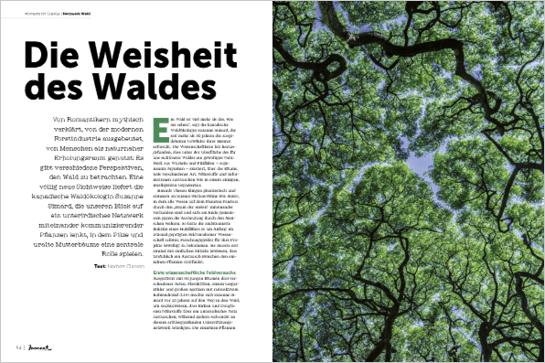 moment by moment 02/2018: Die Weisheit des Waldes