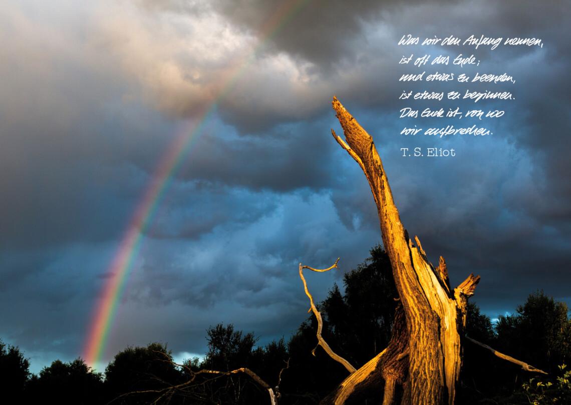 Das Abendlich strahlt einen Baumstumpf an, im Hintergrund bedrohliche Wolken und ein Regenbogen